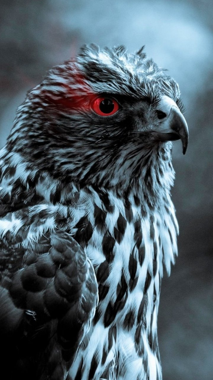 #eagle #red #eyes #eye #animals